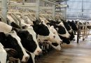 Mega farms: the Next Great Crime?