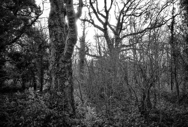 Winter urban woodland